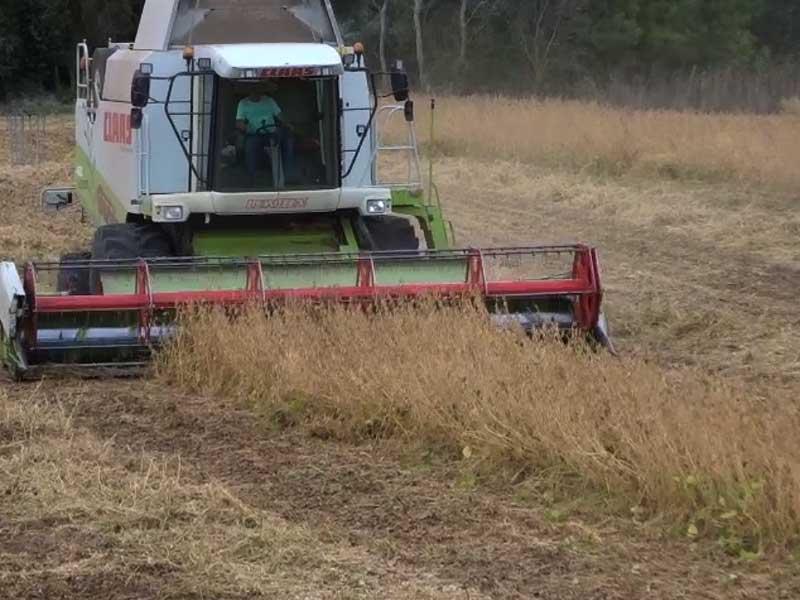 Cultivo de soja